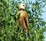 Voyage dans le Pantanal Nord au Brésil avec une agence locale : Voyage au Brésil