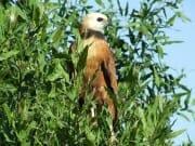 Read more about the article Voyage dans le Pantanal Nord au Brésil avec une agence locale : Voyage au Brésil