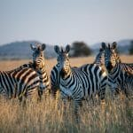 Quel Safari choisir en Tanzanie ?