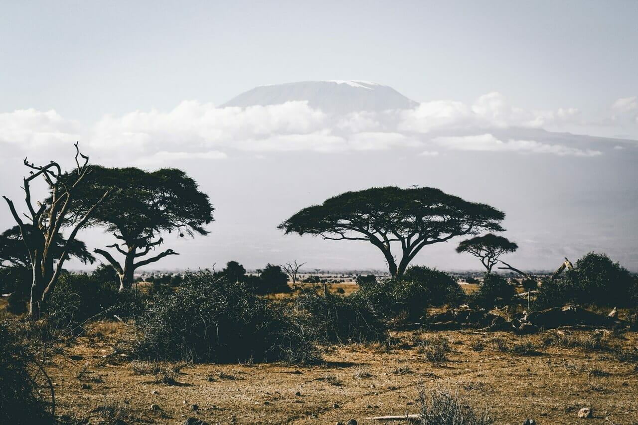 Quand partir en safari dans le parc national du Serengeti ?